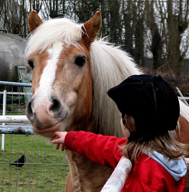 equitazione parco dora